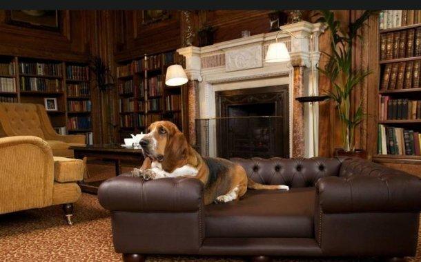 Evcil Hayvanlar İçin Ev Dekorasyon Fikirleri