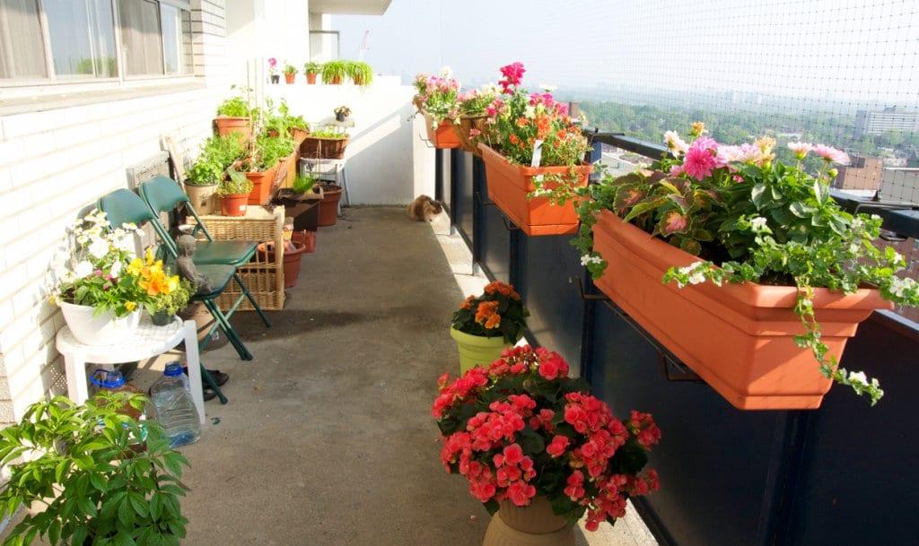 balkon-bahceciligi