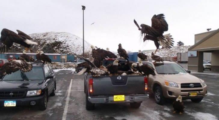 Alaska Kartalları