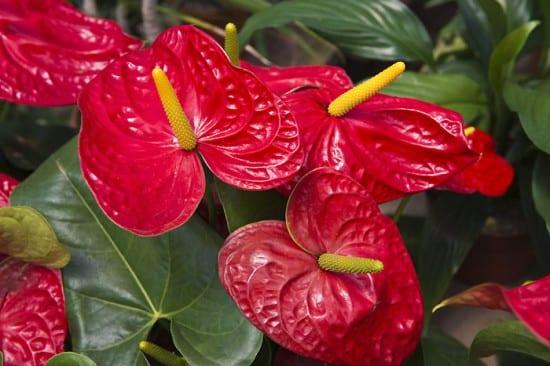 İç mekan saksı bitkileri ve bakımları