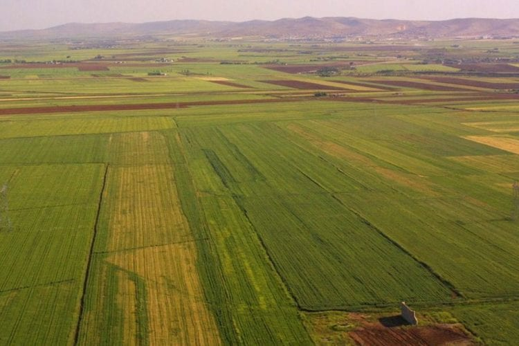 arazibankaciligi