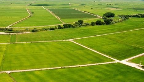 arazi