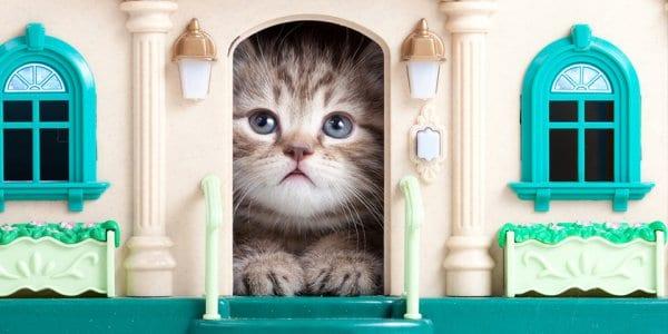 En İyi Kedi Evleri