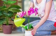 Ev Bitkileri İçin Sonbahar Hazırlığı