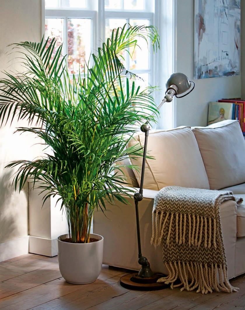 Bakımı Kolay Salon Bitkileri