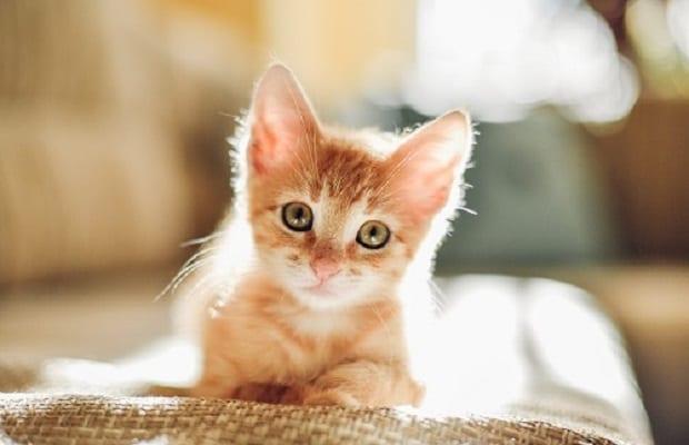 Kediniz İçin Keyifli Bir Yaşam Alanı