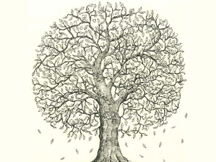 Soy Ağacı Nedir Soy Ağacı Sorgulama Nasıl Yapılır